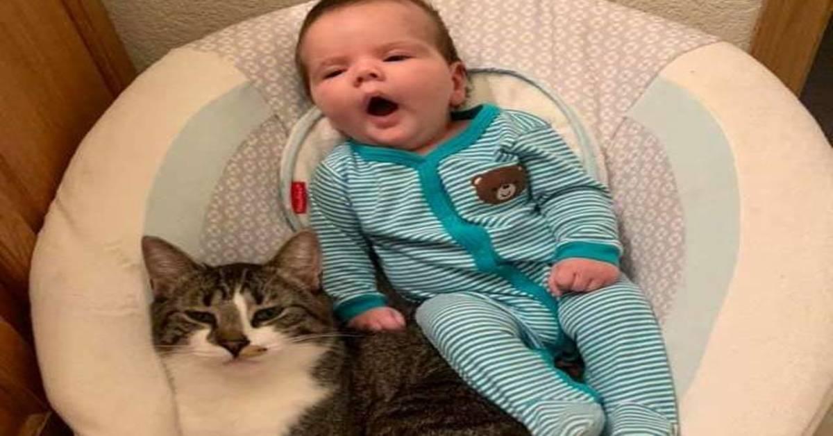gatto con bambino