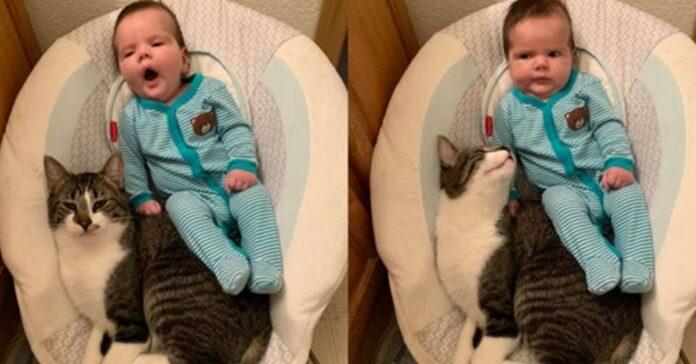 Gatto in compagnia di un bambino