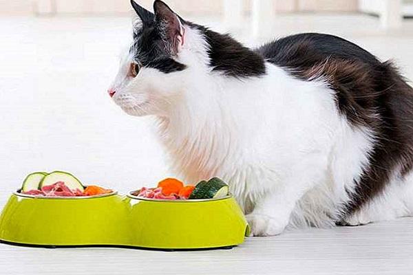 gatto e verdure