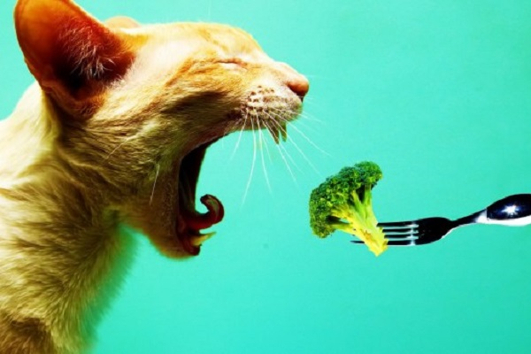 gatto e broccolo
