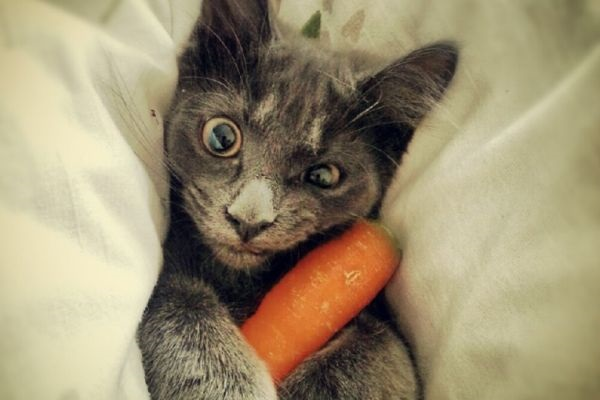 gatto e carota