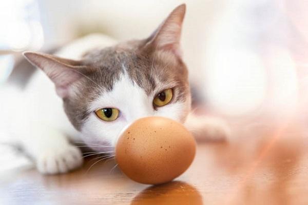 gatto e uovo su tavolo