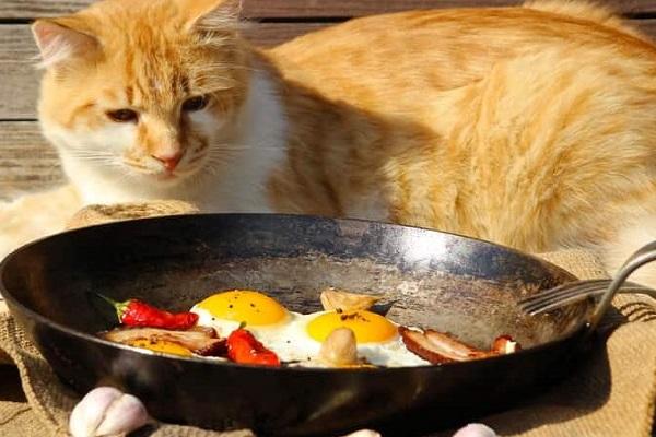 gatto e uovo a occhio di bue