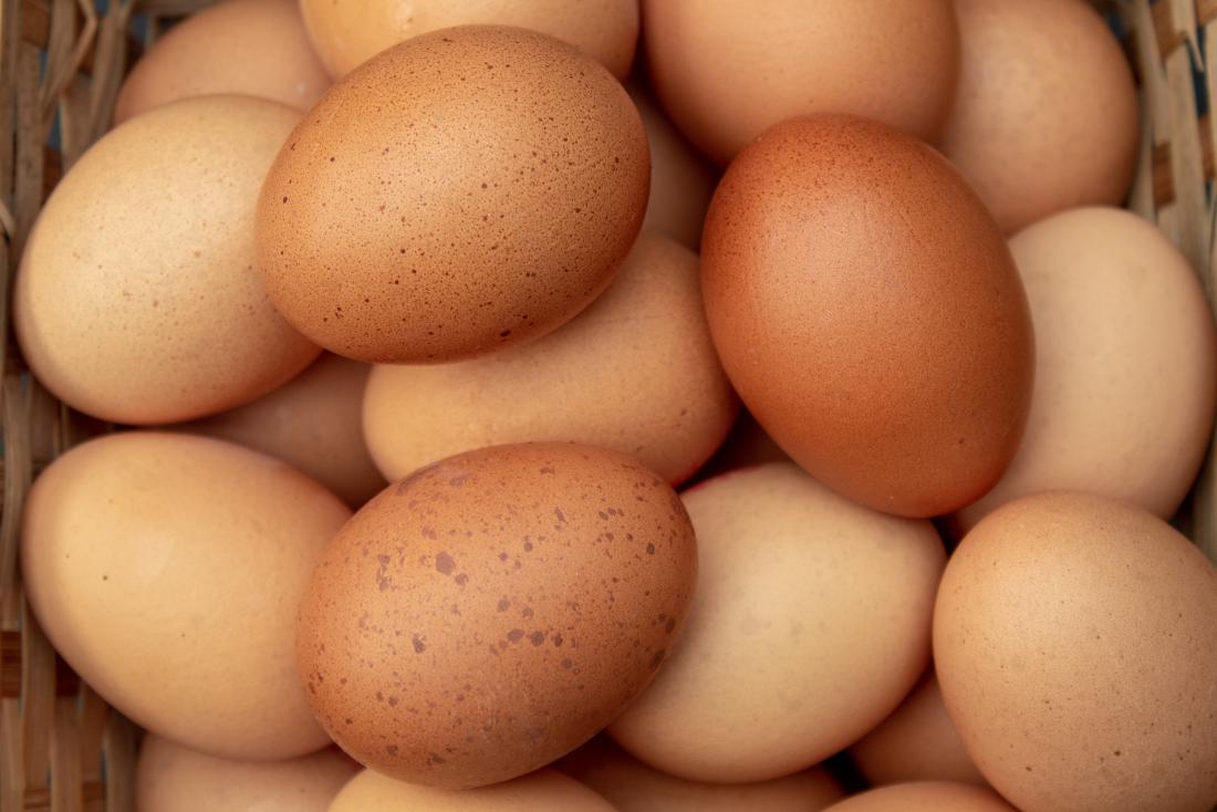 gatto mangia il guscio dell'uovo