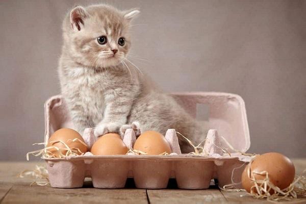 gatto e cartone di uova