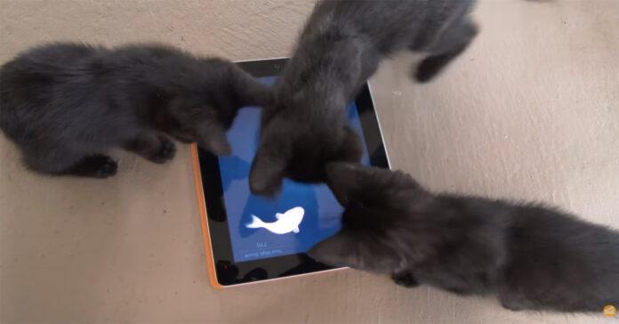 Gattini che giocano con un tablet
