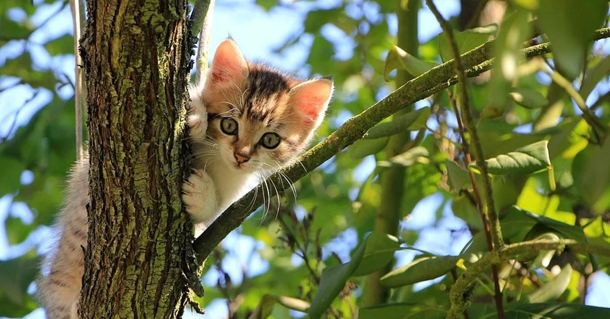 Gattino su un albero