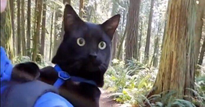 gattino passeggiate padroncina video