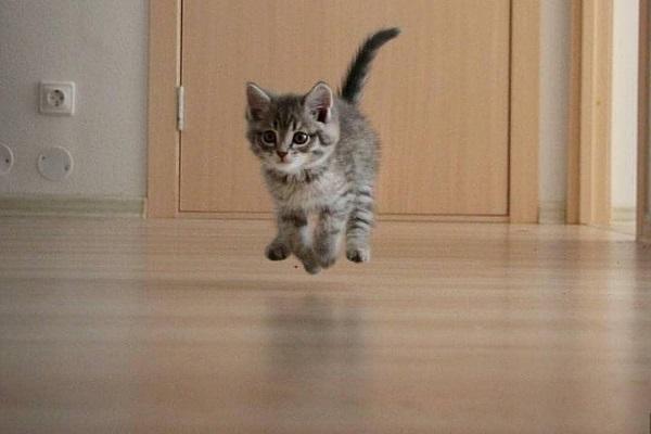 gattino che salta