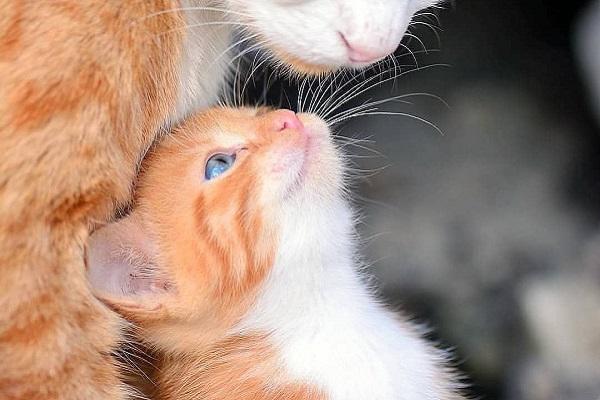 gattino e mamma