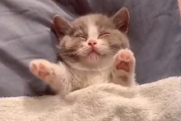gattino incubi video