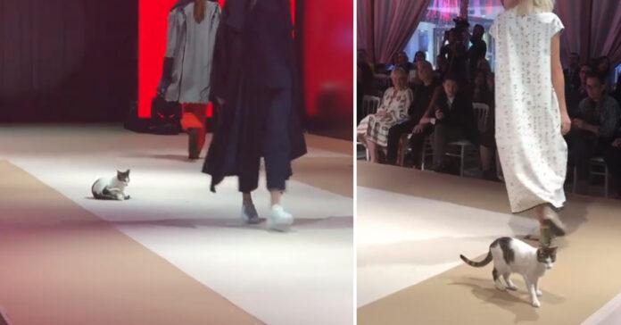 Gatto ad una sfilata di moda