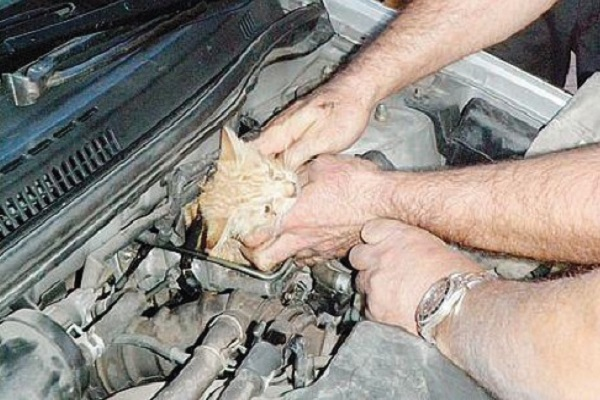 gattino nella marmitta