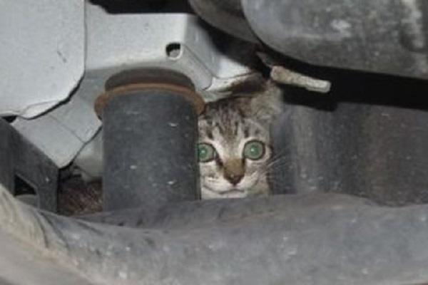 gattino marmitta