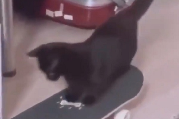 gattino nero skateboard video