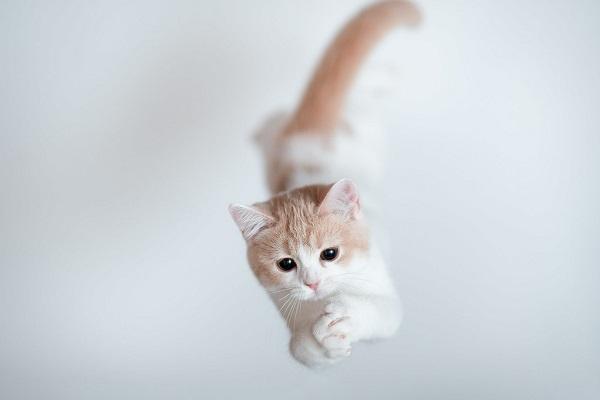 gattino durante un salto