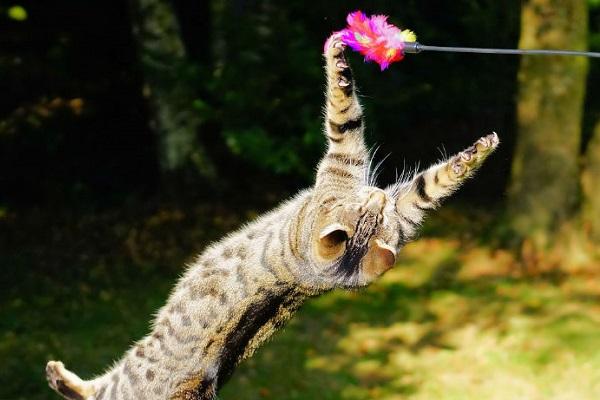 gatto acrobata