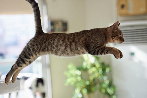 Gatto che sta saltando