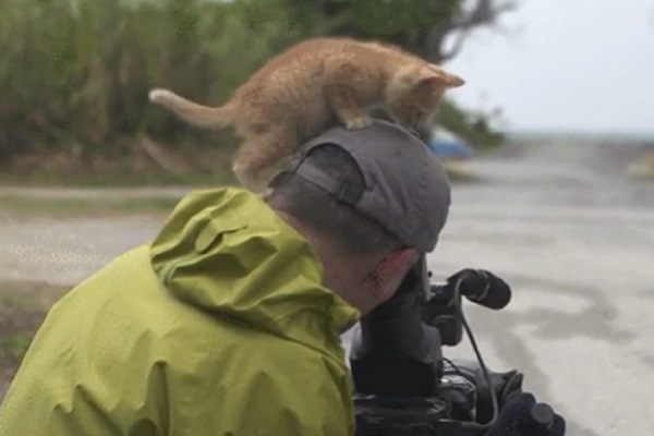 gattino innamora cameraman video