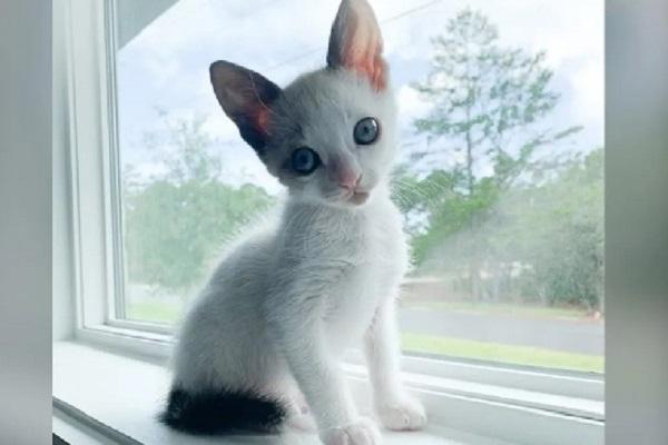 gattino sottopeso video