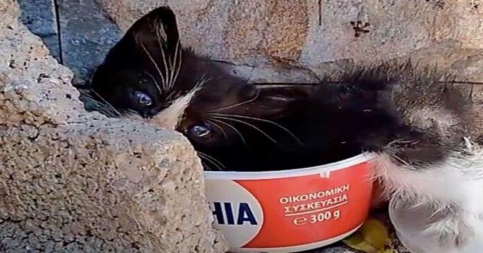 gattino scatola video