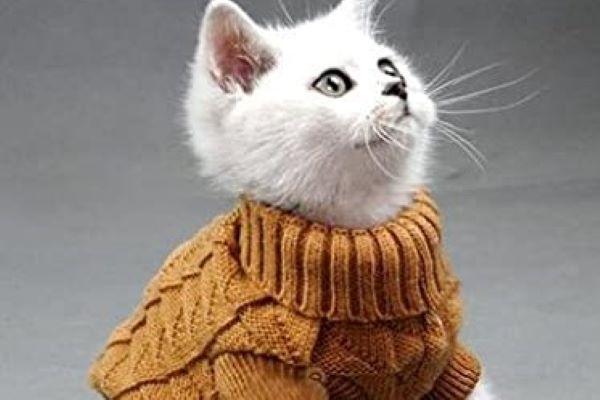 gatto adulto con il raffreddore