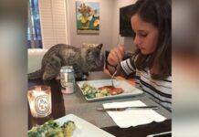 Gatto seduto a tavola