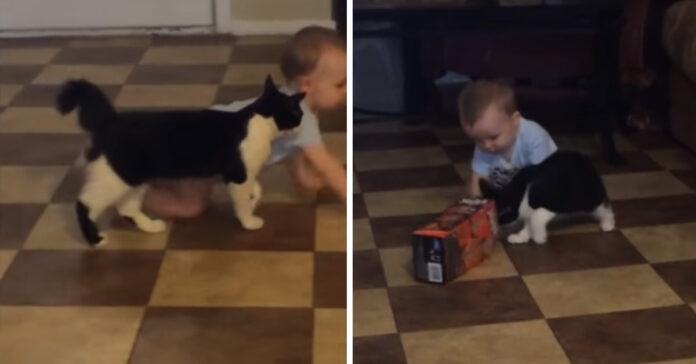 Gatto con un bambino