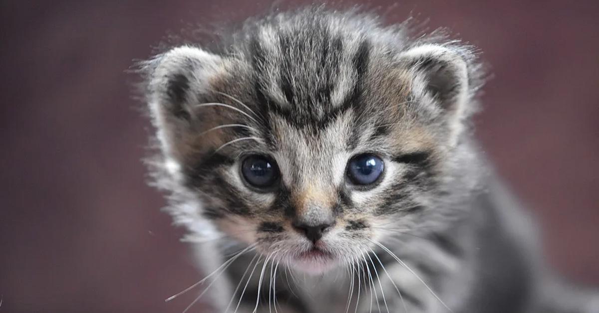 Gattino osserva