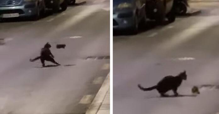 Gatto che lotta con un topo