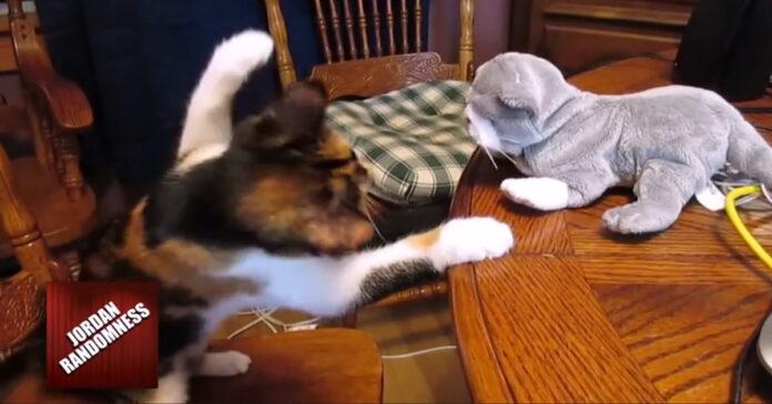 Gatto contro peluche