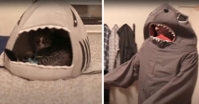 Gatto che osserva proprietario travestito da squalo