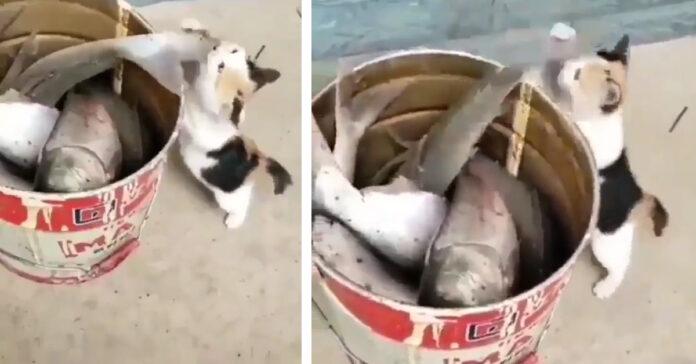 Gatto cattura pesce
