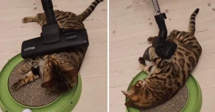 Gatto con un'aspirapolvere