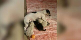 gattini allattati da una cagnolina