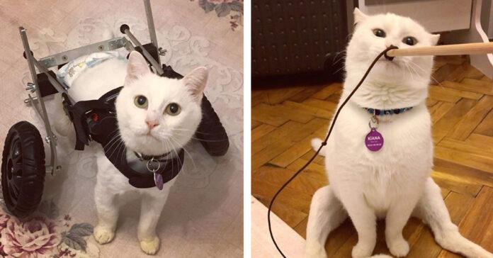Gattino con carrellino