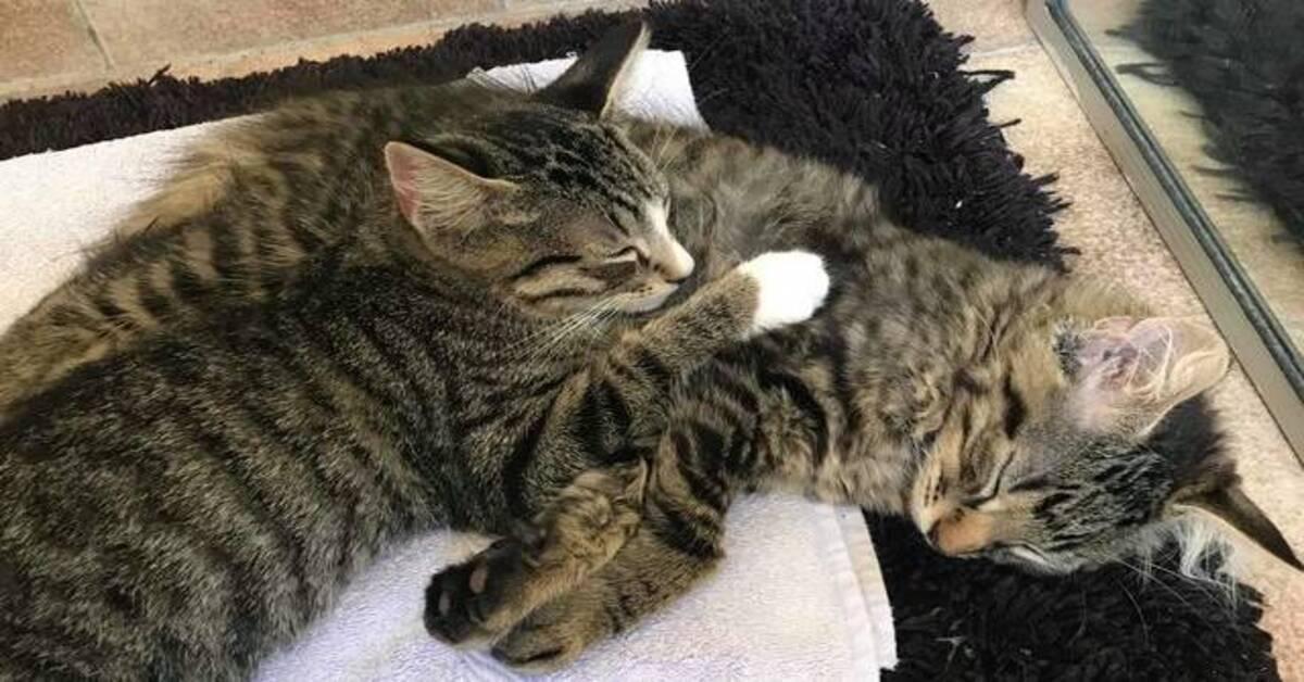 gatti che dormono abbracciati