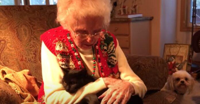 nonna gattino nero video