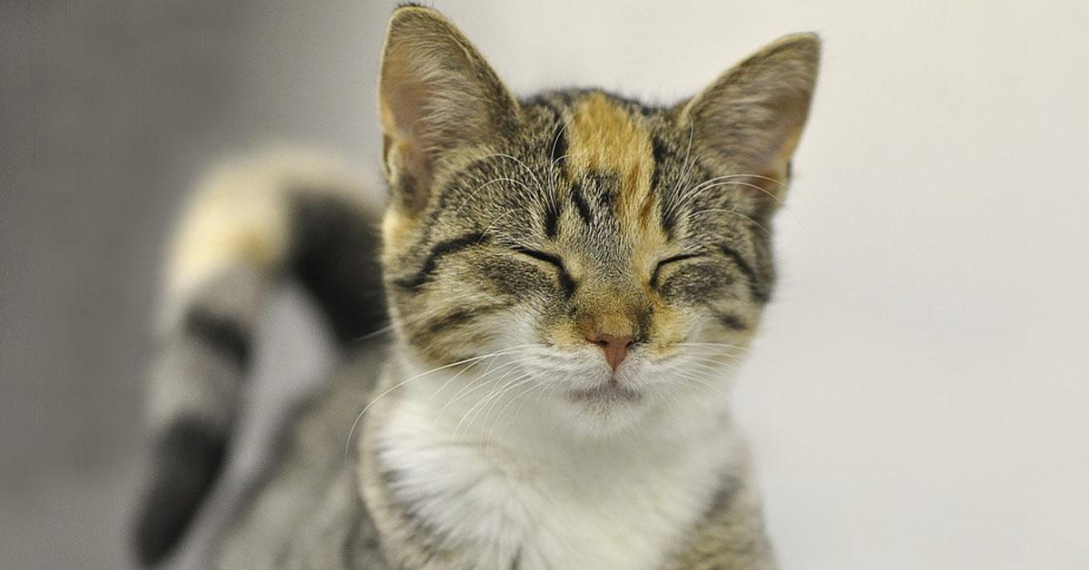 Gatto con gli occhi chiusi