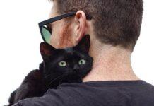 gatto in braccio a padrone