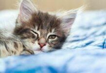 perché i gatti fanno l'occhiolino