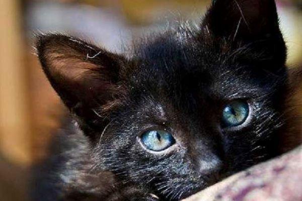 gattino guarda