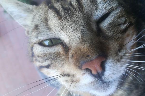 gattino strizza l'occhio