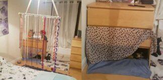 stanza per gatti