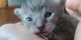 titan gattino salvato foto