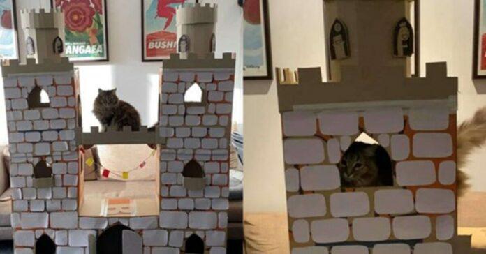 Gatto che gioca in un castello