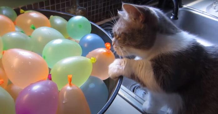 Gattino con dei palloncini d'acqua