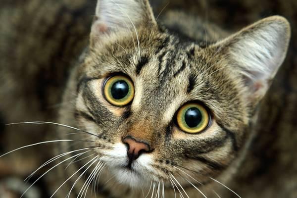gatto sotto shock