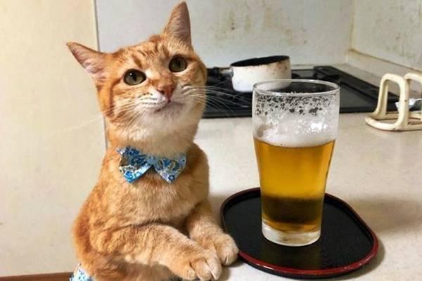 gatto con un bicchiere di birra