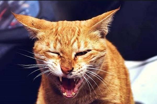 gatto con i conati di vomito